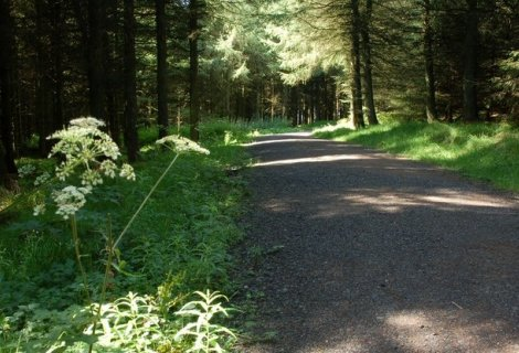 Image of Ballyboley forest
