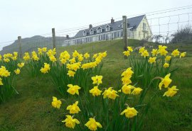 Welcome to April! Sping is coming to stay on the Antrim coast