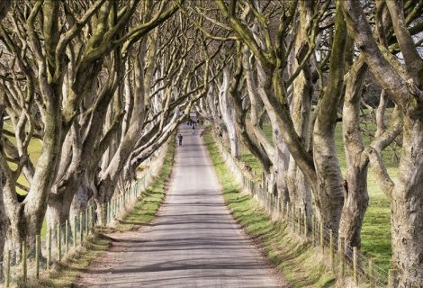 Image of The dark hedges