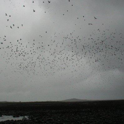 Shores of strangford Lough