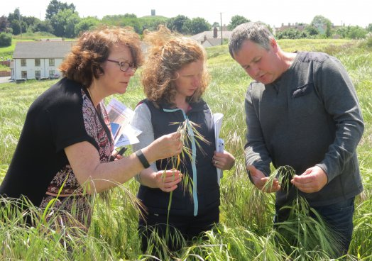 UFU Watch - Brome grass concerns growing