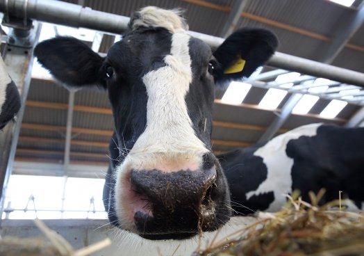 UFU urges caution on possible EU milk package announcement
