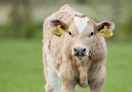 UFU Watch - UFU livestock office bearers address import concerns at Belfast Port